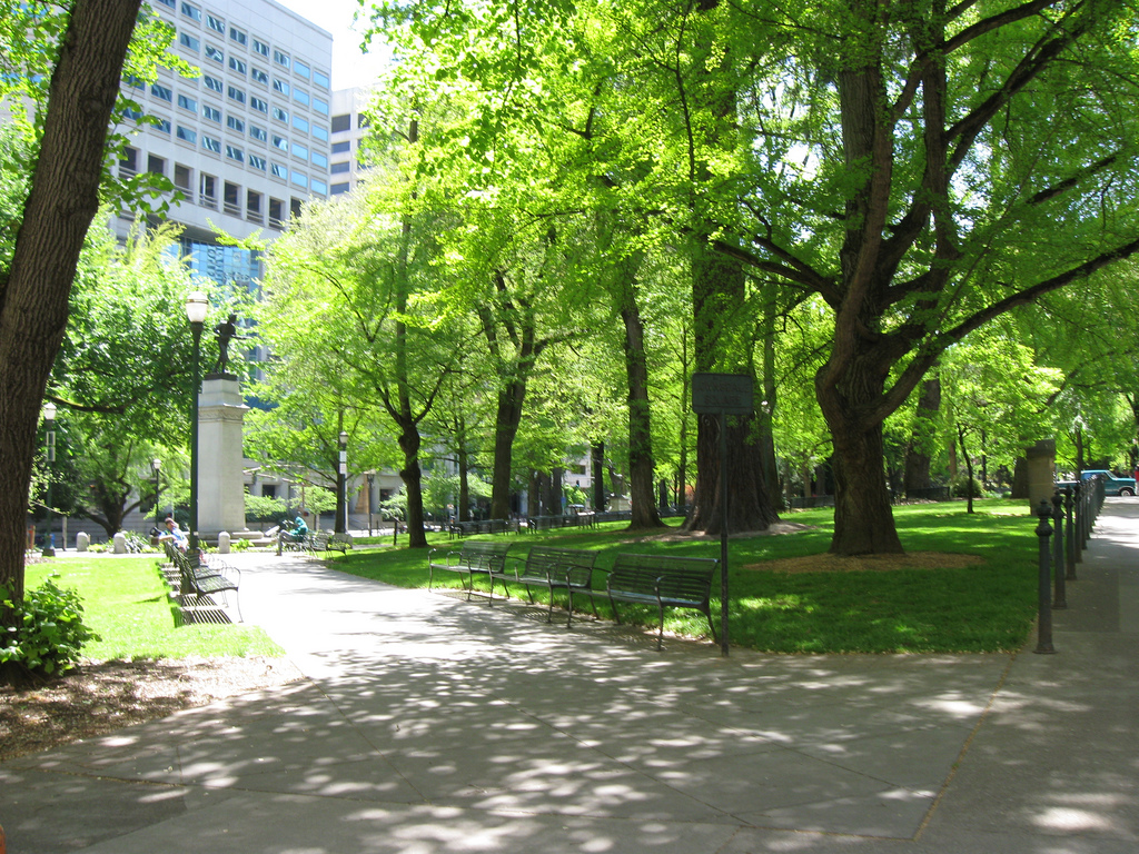 Trees Cool Cities, So How Much Are They Able To Lower Temperatures?