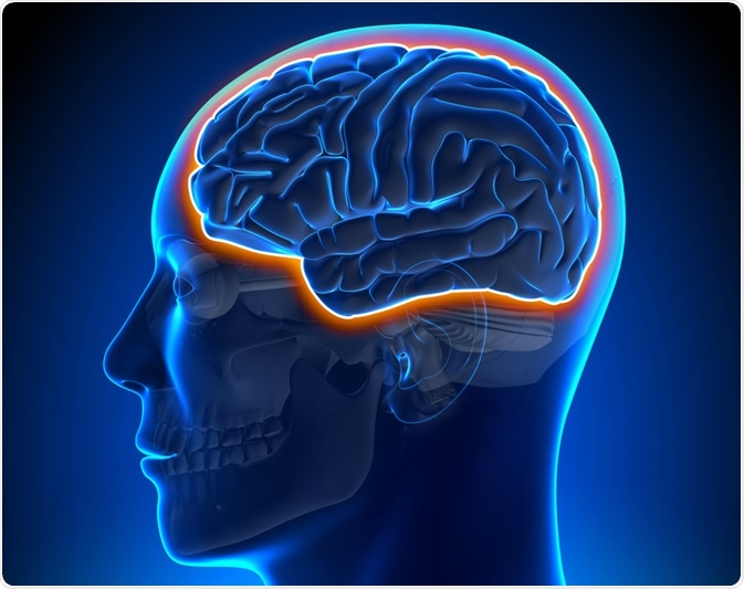 Nanomaterials Affect Their Ability To Cross The Blood-Brain Barrier